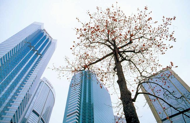0 my photographs hong kong tree in the city hy18 1024